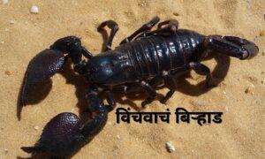 Scorpion's family